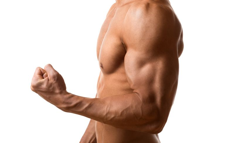 Arm muscles: anatomy and structure of the biceps, triceps and forearms